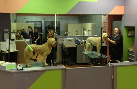 Groomer longmont dog grooming cat grooming paws 2 groom demo 1 solutioingenieria Images