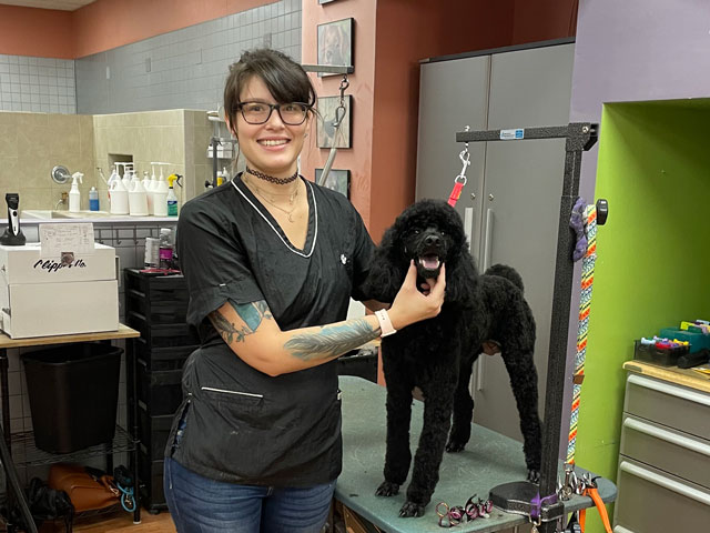 Groomer longmont dog grooming cat grooming paws 2 groom demo 6 solutioingenieria Images