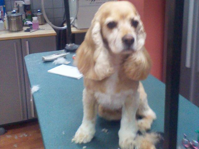 Groomer longmont dog grooming cat grooming paws 2 groom grooming gallery we love our 4 legged customers solutioingenieria Images