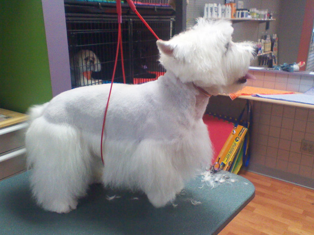 Groomer longmont dog grooming cat grooming paws 2 groom product gallery 4 solutioingenieria Images